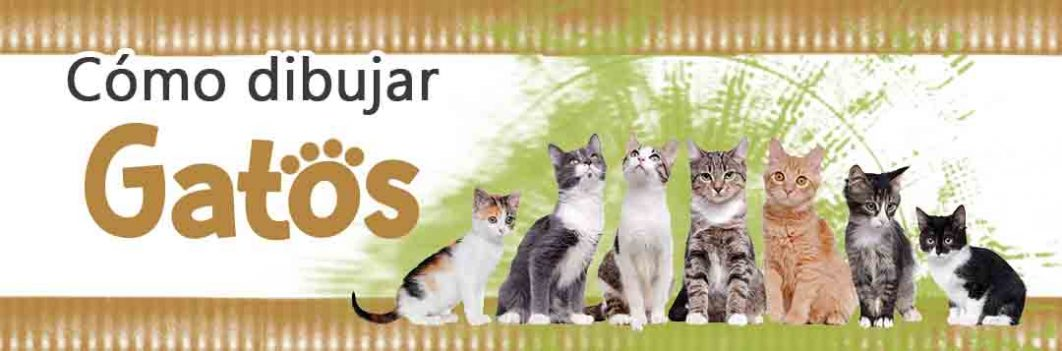 banner gatos blog